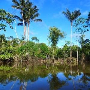 nature 1 - Iquitos & The Amazon River