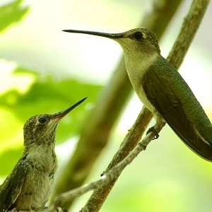 wildlife watching - 8-DAY TOUR INCA TRAIL TO MACHU PICCHU, CUSCO, SACRED VALLEY